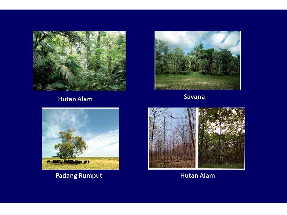 Savana Hutan Alam Padang Rumput Hutan Alam