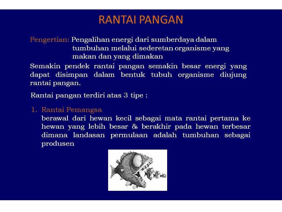 RANTAI PANGAN Pengertian: Pengalihan energi dari sumberdaya dalam tumbuhan melalui sederetan organisme yang makan dan yang dimakan.