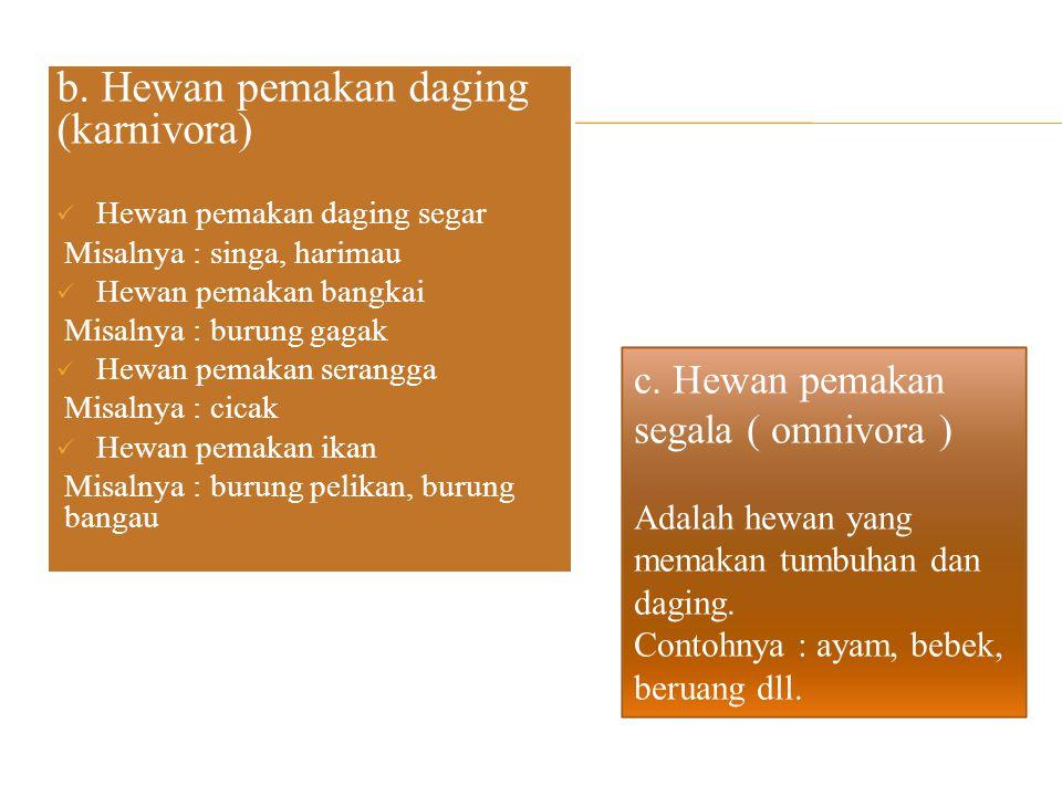 b. Hewan pemakan daging (karnivora)