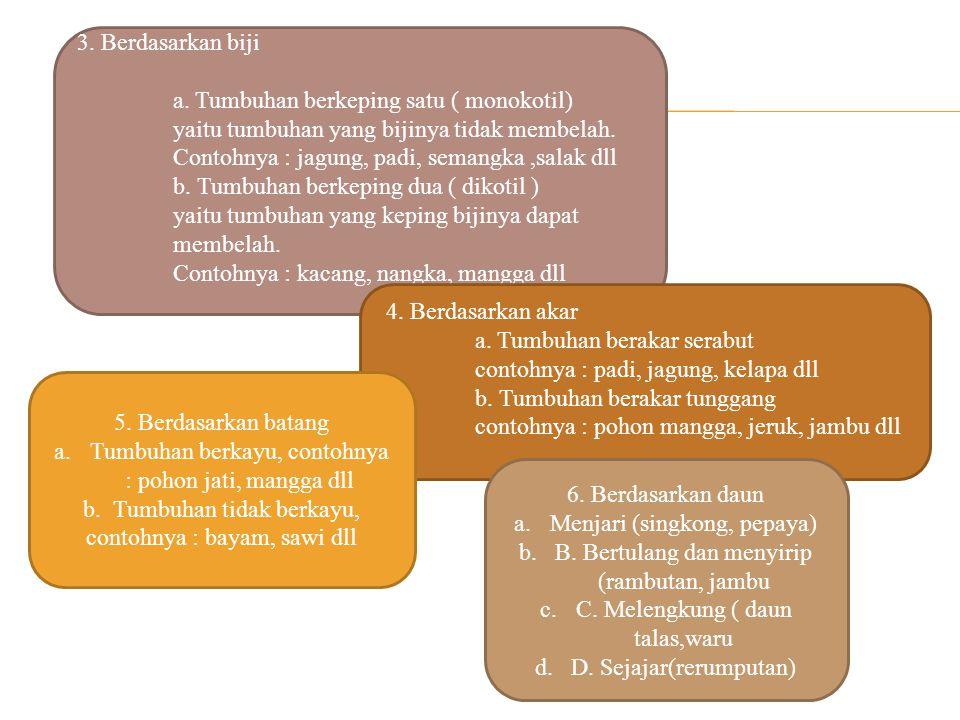 a. Tumbuhan berakar serabut contohnya : padi, jagung, kelapa dll