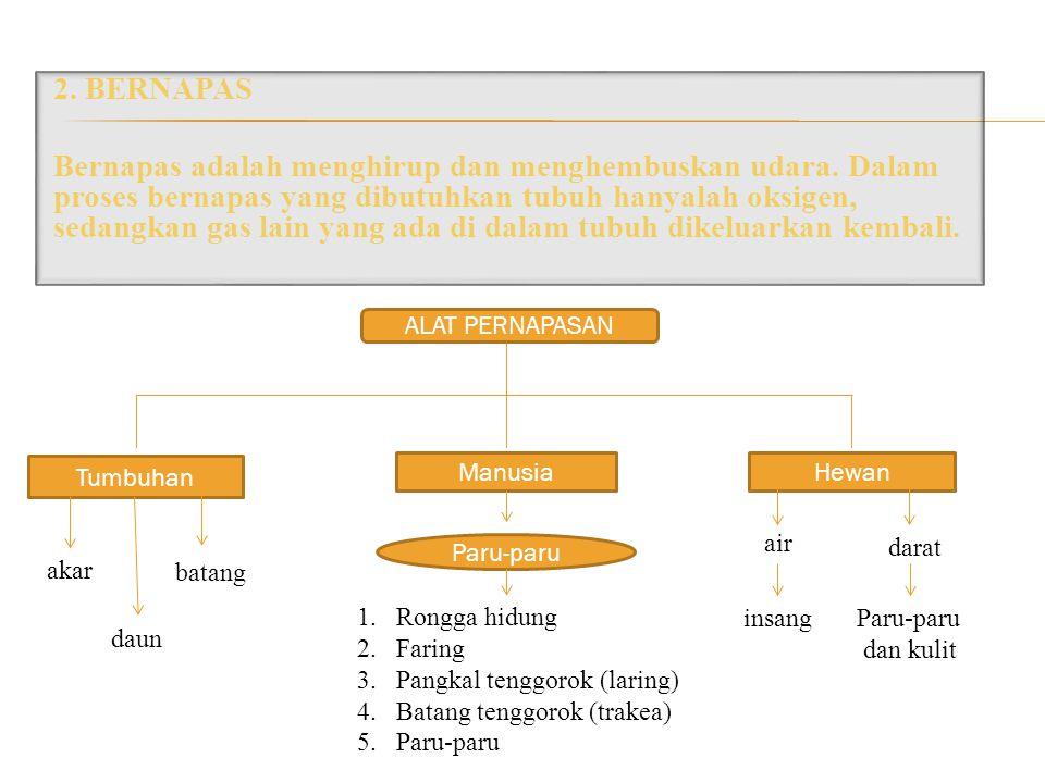 2. BERNAPAS Bernapas adalah menghirup dan menghembuskan udara