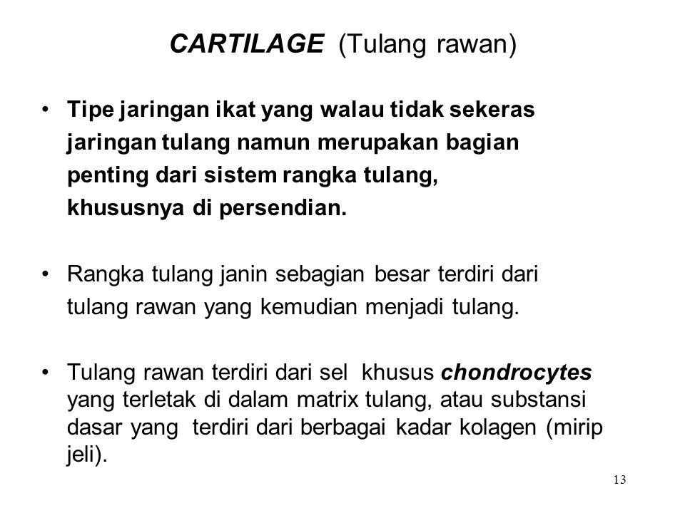 CARTILAGE (Tulang rawan)