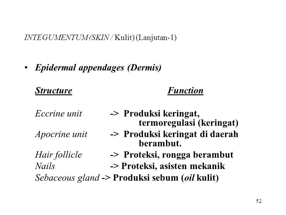 INTEGUMENTUM (SKIN / Kulit) (Lanjutan-1)