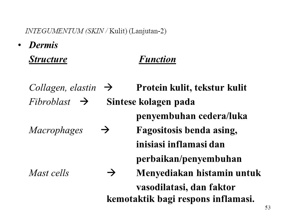 INTEGUMENTUM (SKIN / Kulit) (Lanjutan-2)