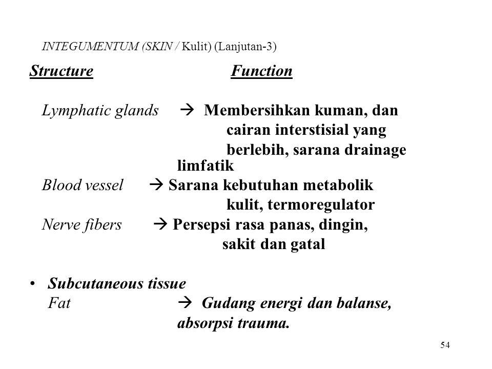 INTEGUMENTUM (SKIN / Kulit) (Lanjutan-3)