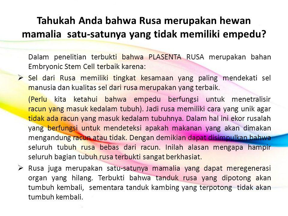 Tahukah Anda bahwa Rusa merupakan hewan mamalia satu-satunya yang tidak memiliki empedu