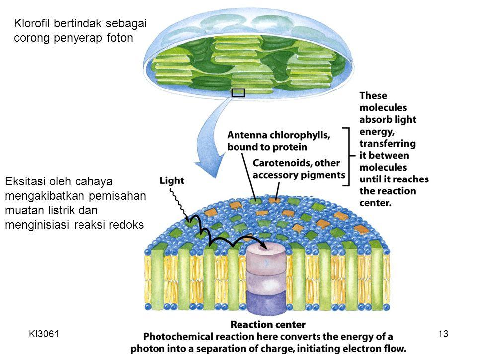 Klorofil bertindak sebagai corong penyerap foton