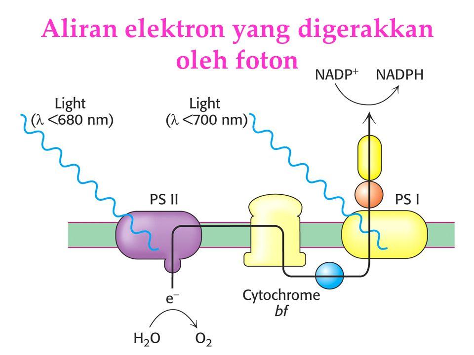 Aliran elektron yang digerakkan oleh foton