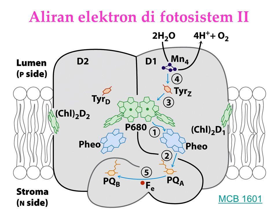 Aliran elektron di fotosistem II