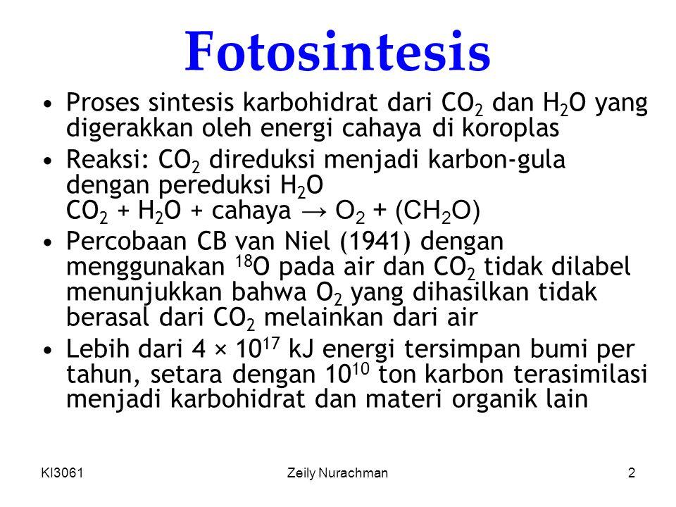 Fotosintesis Proses sintesis karbohidrat dari CO2 dan H2O yang digerakkan oleh energi cahaya di koroplas.