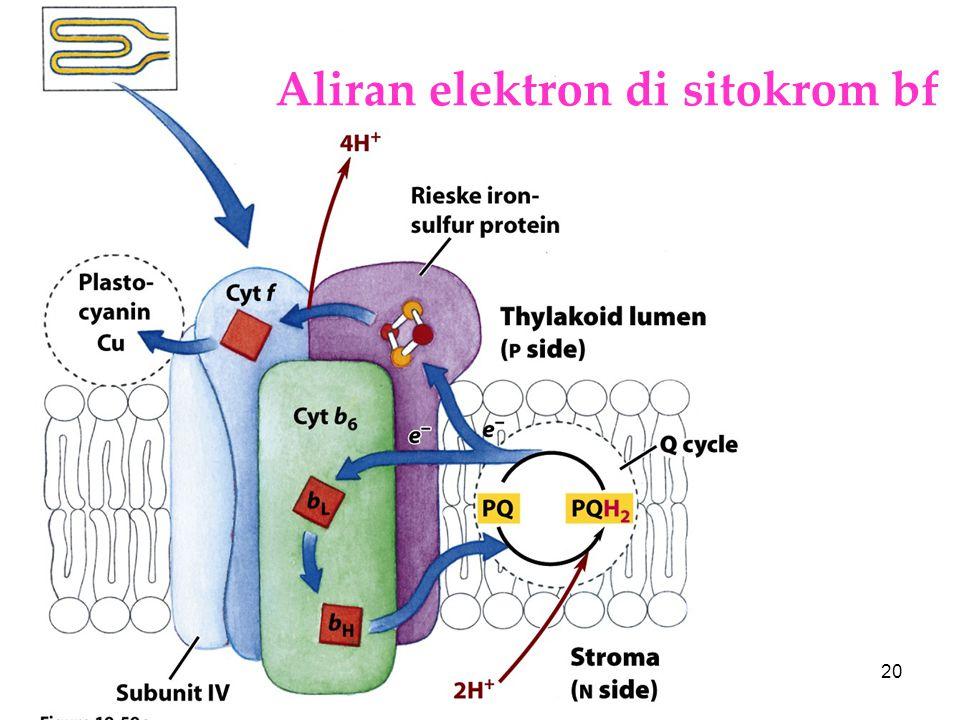 Aliran elektron di sitokrom bf