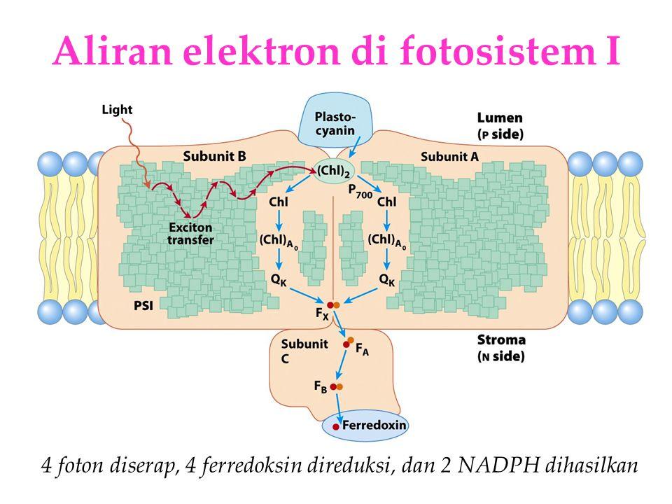 Aliran elektron di fotosistem I