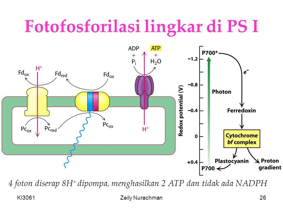 Fotofosforilasi lingkar di PS I