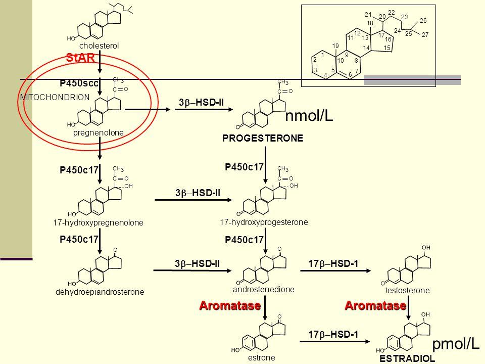 nmol/L pmol/L StAR Aromatase Aromatase P450scc 3b-HSD-II PROGESTERONE