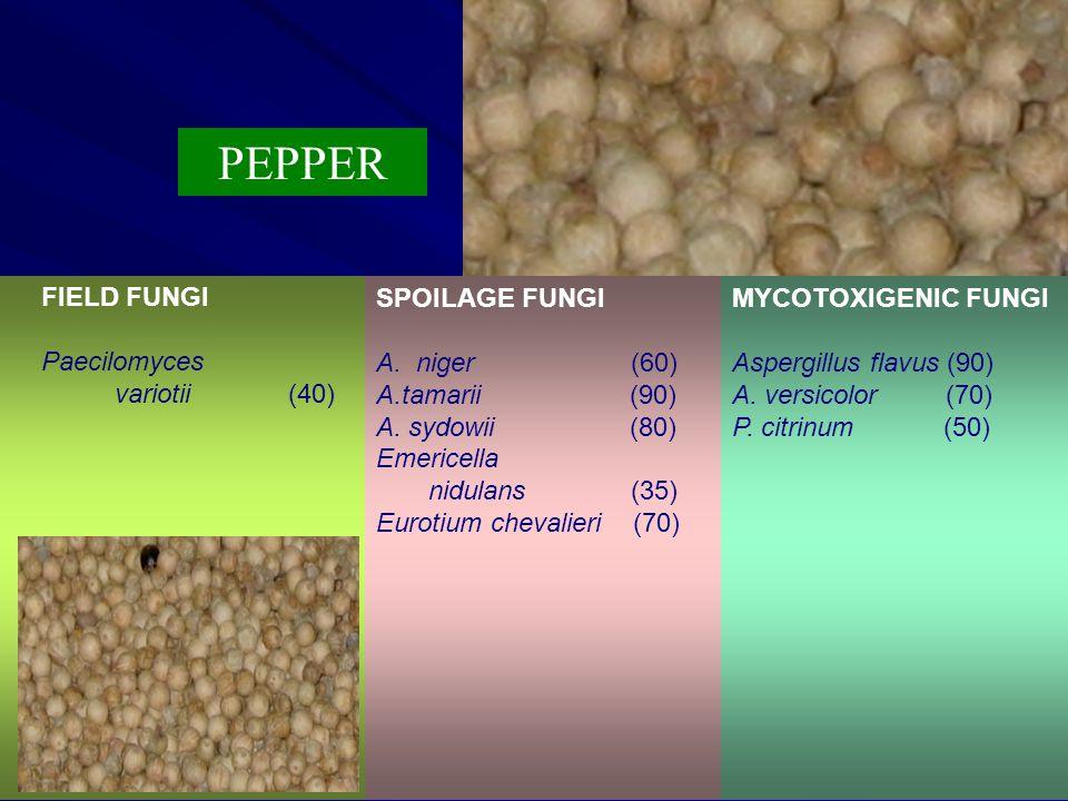 PEPPER FIELD FUNGI Paecilomyces variotii (40) SPOILAGE FUNGI