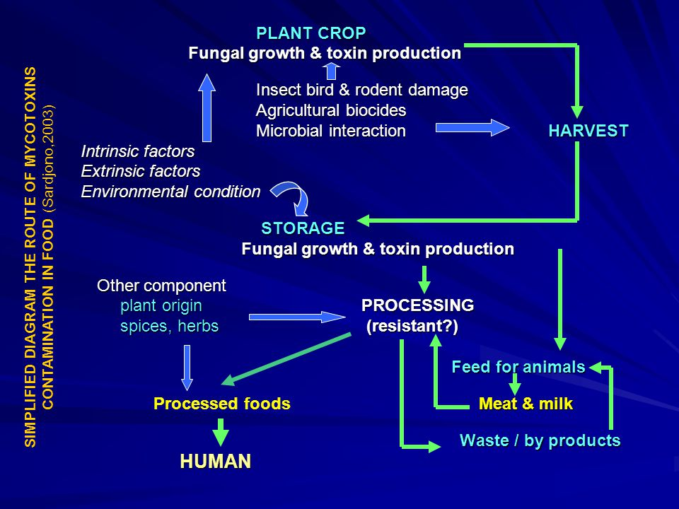 Fungal growth & toxin production Insect bird & rodent damage