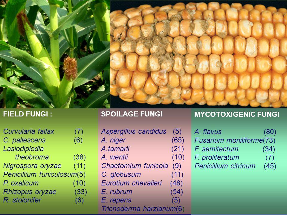 FIELD FUNGI : Curvularia fallax (7) C. pallescens (6) Lasiodiplodia. theobroma (38)