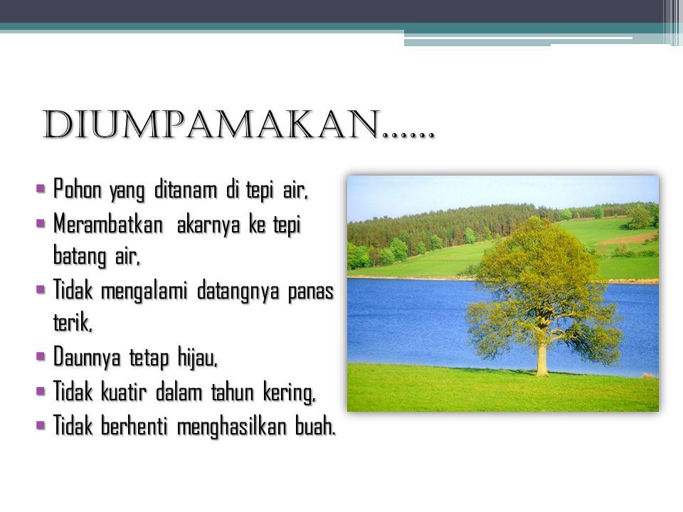 DIUMPAMAKAN...... Pohon yang ditanam di tepi air,