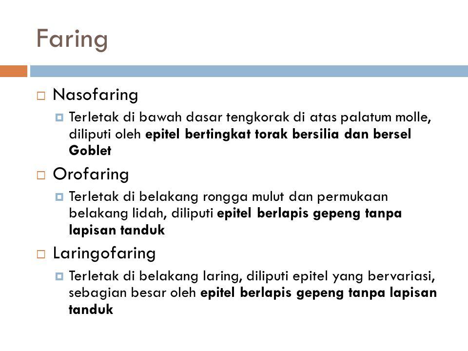 Faring Nasofaring Orofaring Laringofaring