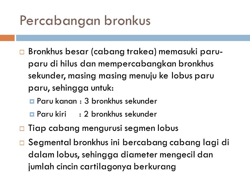 Percabangan bronkus
