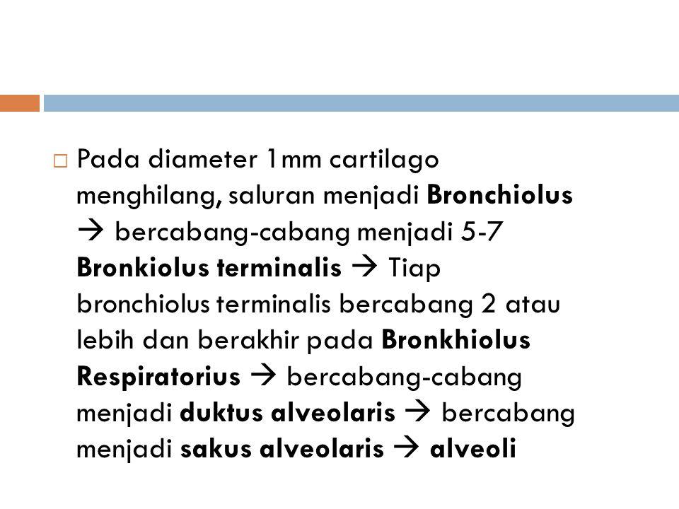 Pada diameter 1mm cartilago menghilang, saluran menjadi Bronchiolus  bercabang-cabang menjadi 5-7 Bronkiolus terminalis  Tiap bronchiolus terminalis bercabang 2 atau lebih dan berakhir pada Bronkhiolus Respiratorius  bercabang-cabang menjadi duktus alveolaris  bercabang menjadi sakus alveolaris  alveoli