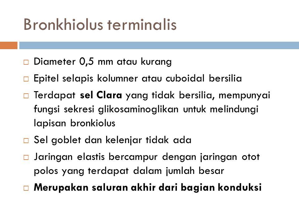 Bronkhiolus terminalis