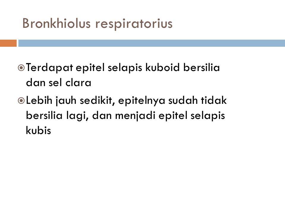 Bronkhiolus respiratorius