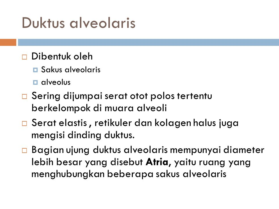 Duktus alveolaris Dibentuk oleh