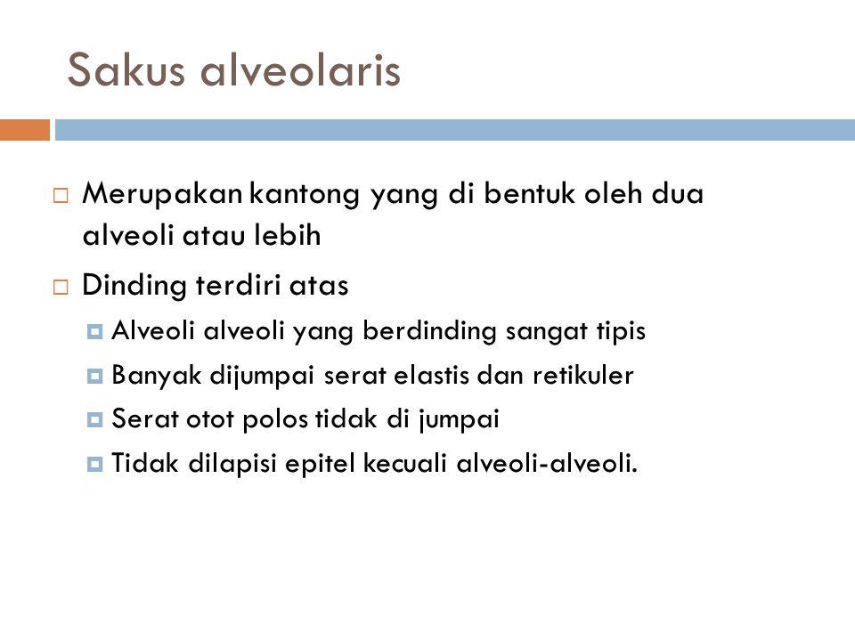 Sakus alveolaris Merupakan kantong yang di bentuk oleh dua alveoli atau lebih. Dinding terdiri atas.