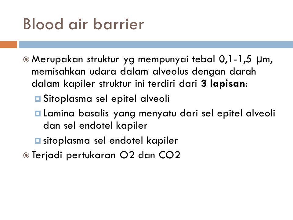Blood air barrier