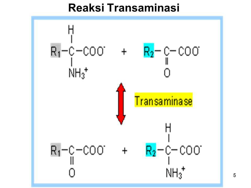 Reaksi Transaminasi