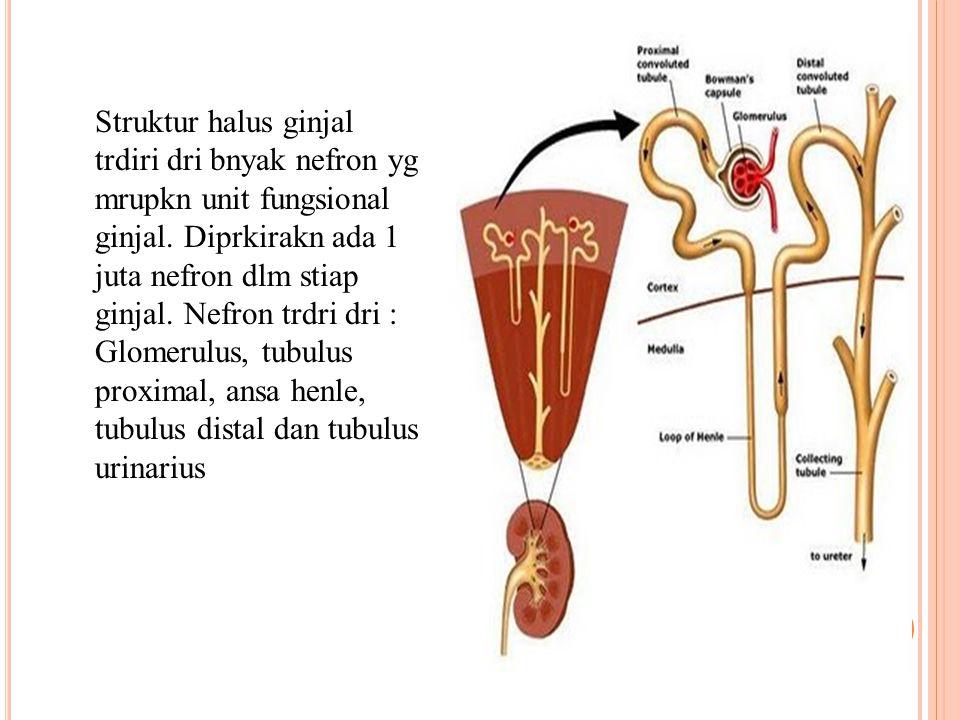 Struktur halus ginjal trdiri dri bnyak nefron yg mrupkn unit fungsional ginjal.