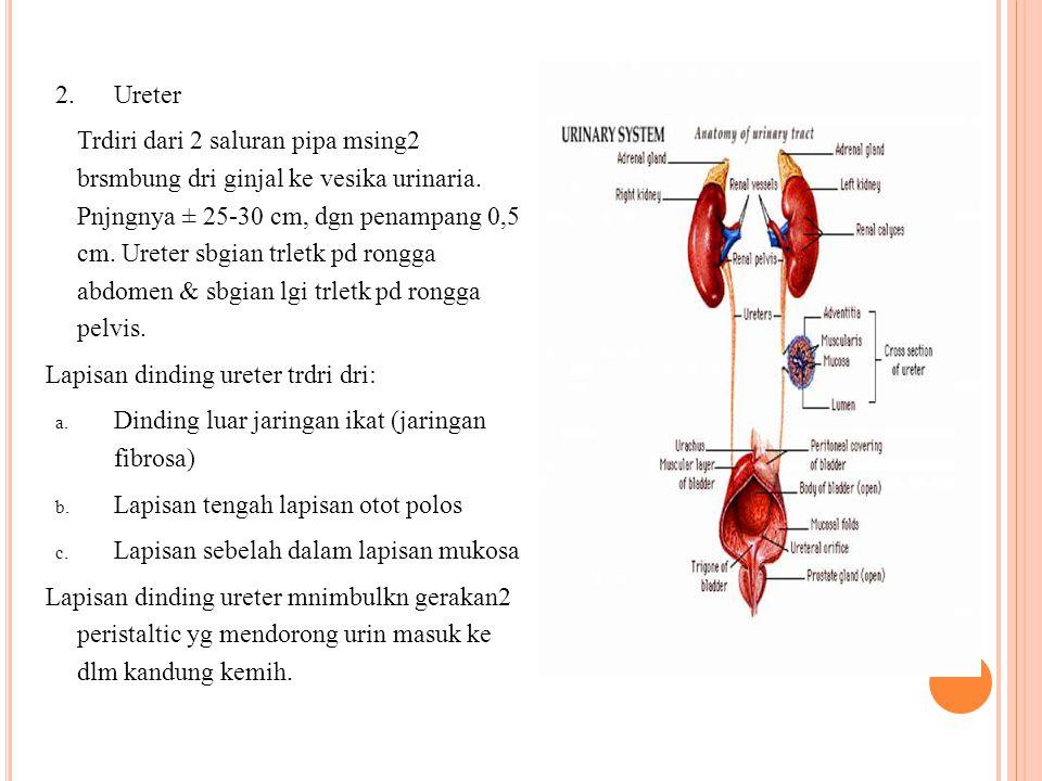 Ureter
