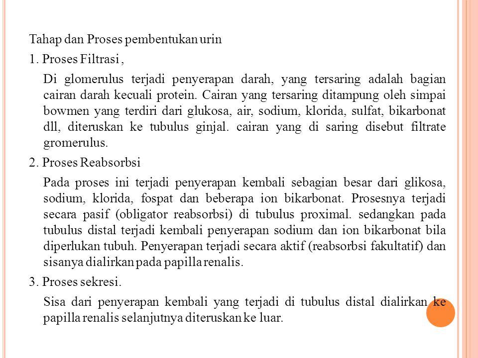 Tahap dan Proses pembentukan urin 1