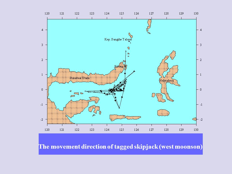 The movement direction of tagged skipjack (west moonson)