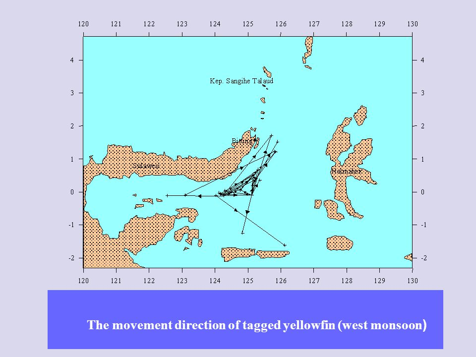 The movement direction of tagged yellowfin (west monsoon)