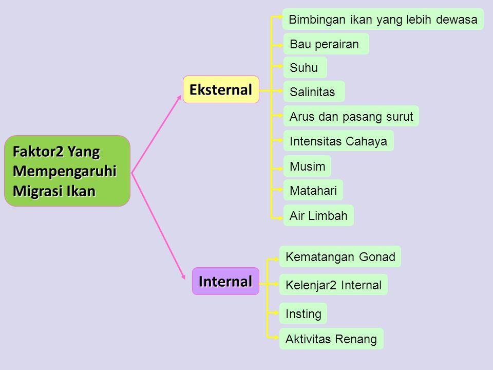 Eksternal Faktor2 Yang Mempengaruhi Migrasi Ikan Internal