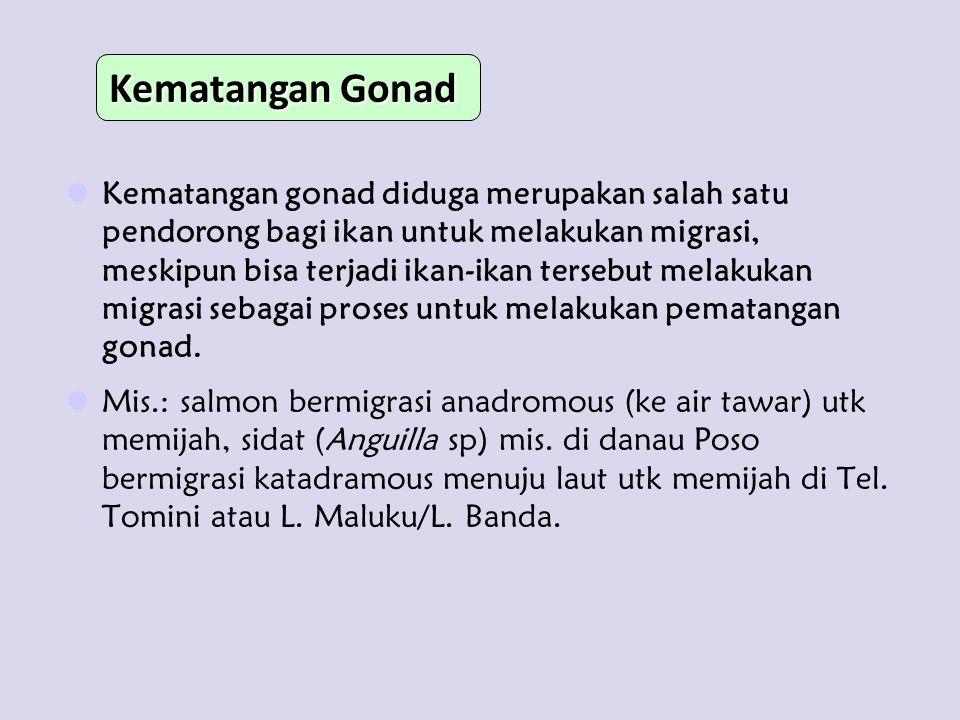 Kematangan Gonad