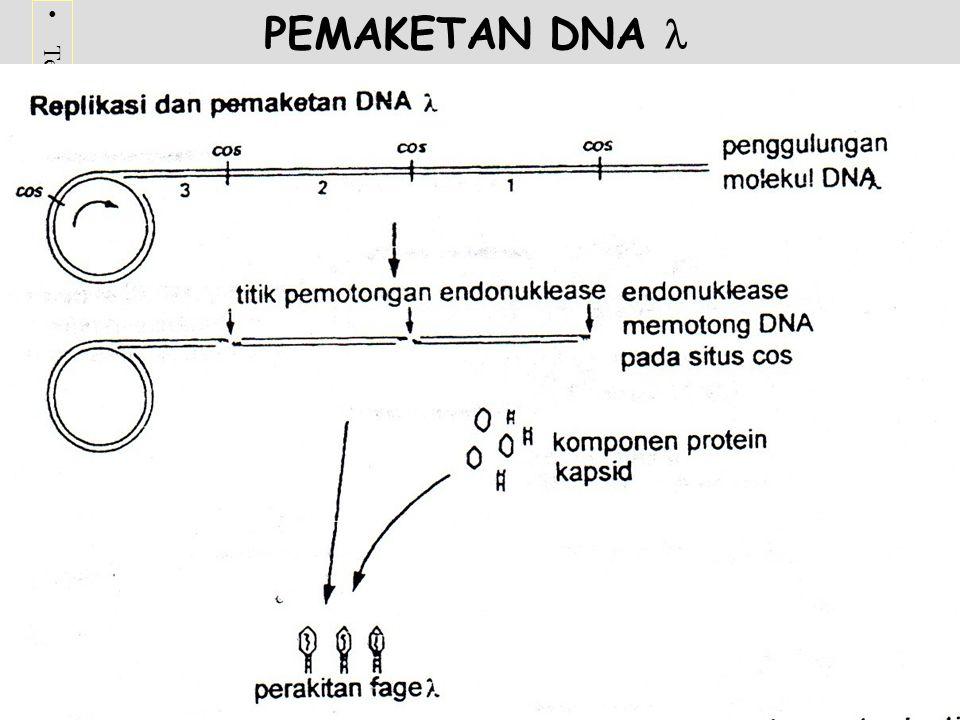 PEMAKETAN DNA 
