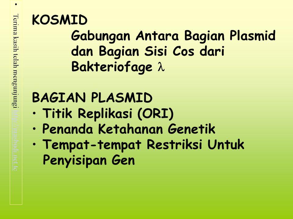 KOSMID Gabungan Antara Bagian Plasmid. dan Bagian Sisi Cos dari. Bakteriofage  BAGIAN PLASMID. Titik Replikasi (ORI)