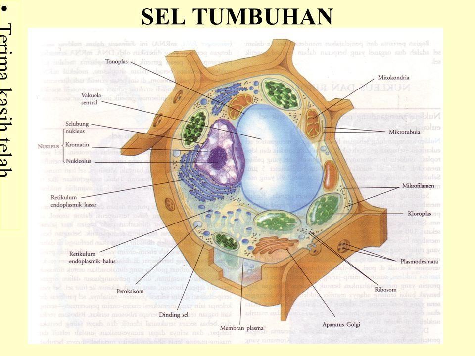 SEL TUMBUHAN