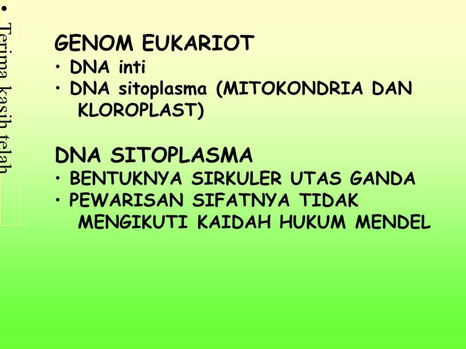 GENOM EUKARIOT DNA SITOPLASMA DNA inti DNA sitoplasma (MITOKONDRIA DAN