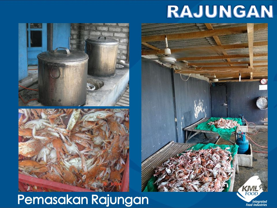 RAJUNGAN Pemasakan Rajungan