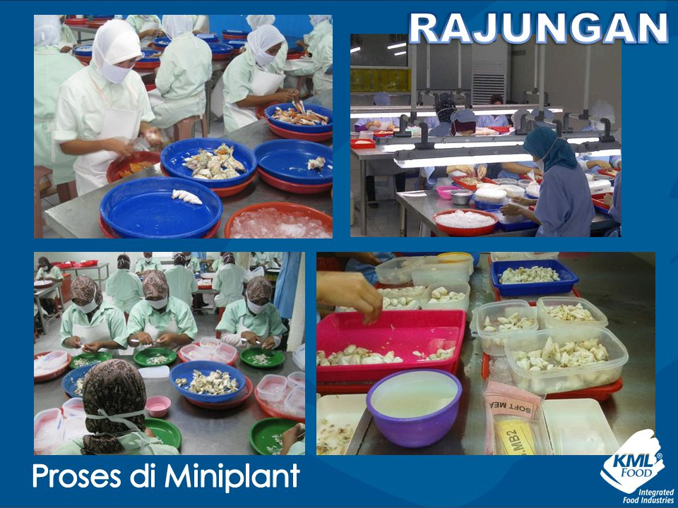 RAJUNGAN Proses di Miniplant