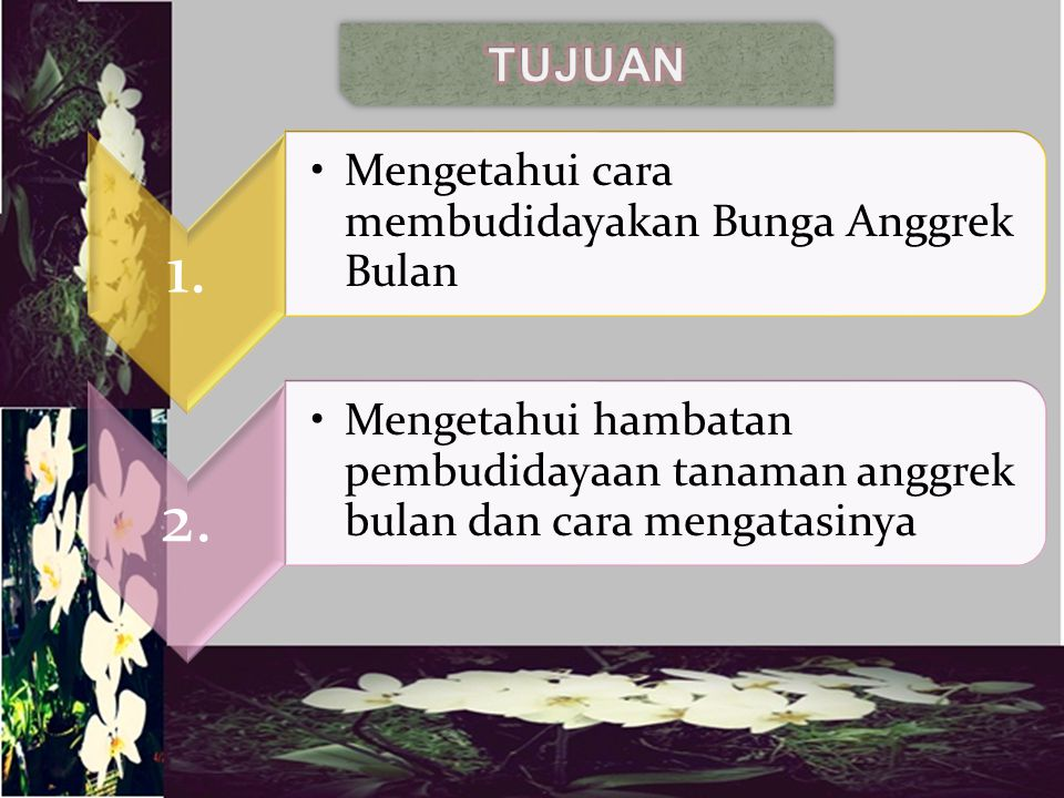TUJUAN 1. Mengetahui cara membudidayakan Bunga Anggrek Bulan 2.