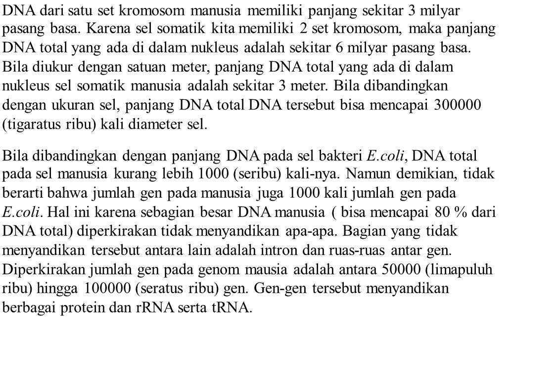 DNA dari satu set kromosom manusia memiliki panjang sekitar 3 milyar