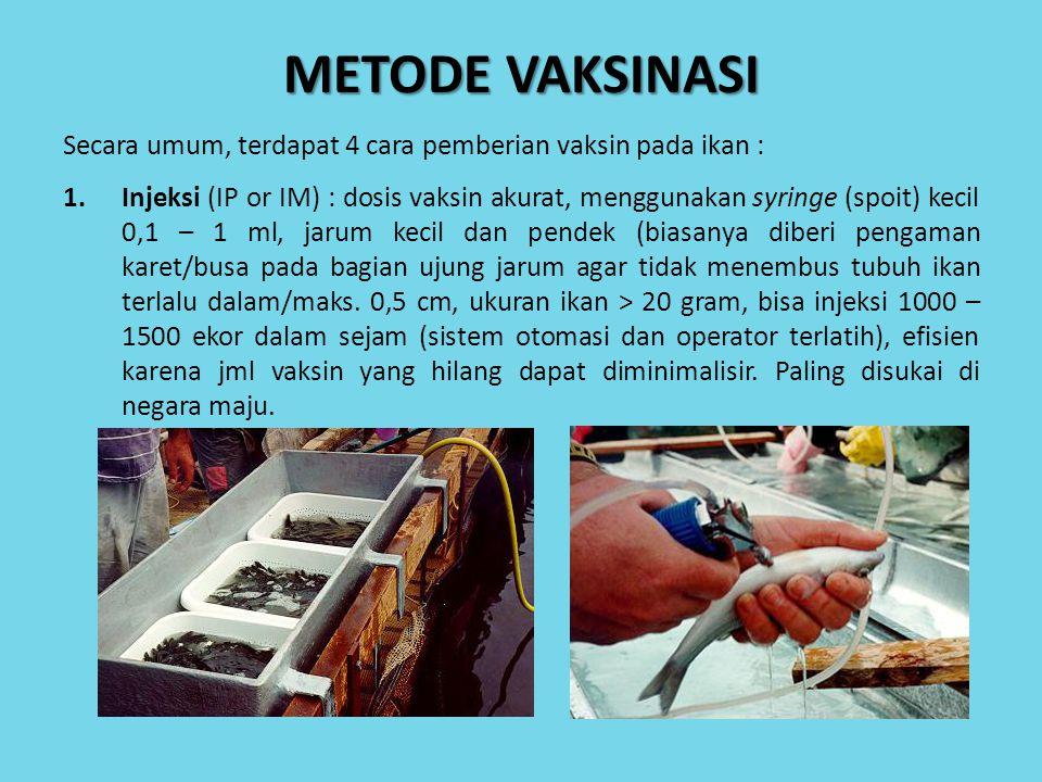 METODE VAKSINASI Secara umum, terdapat 4 cara pemberian vaksin pada ikan :