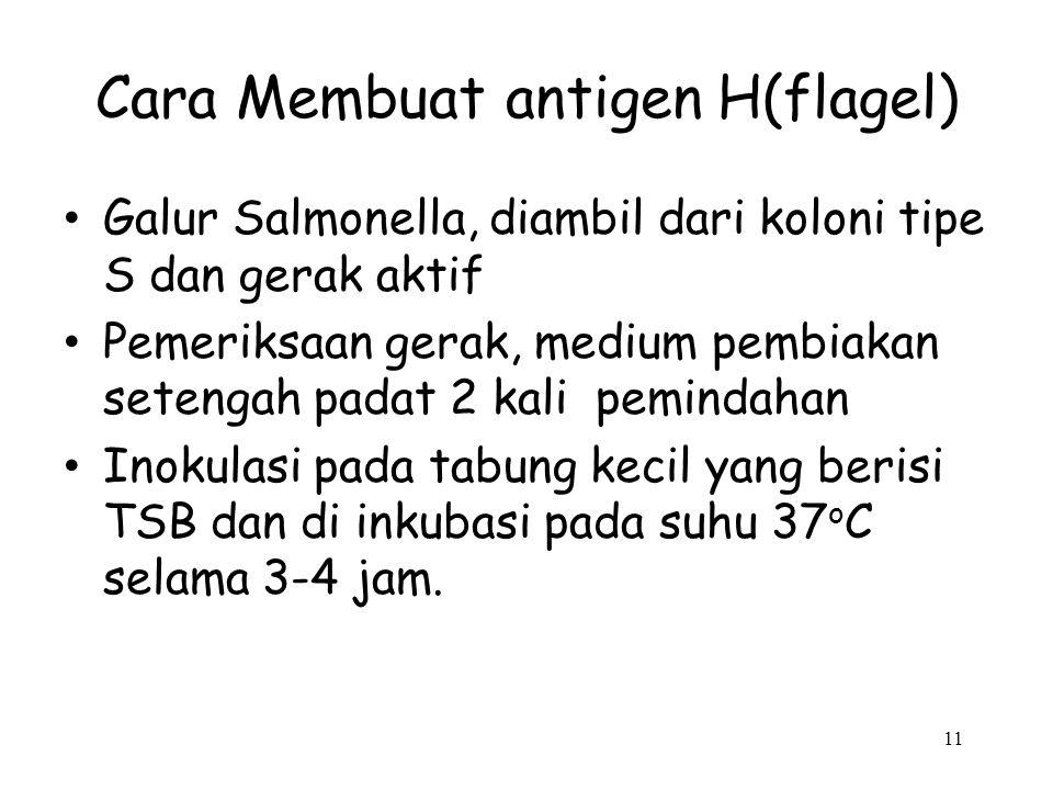 Cara Membuat antigen H(flagel)