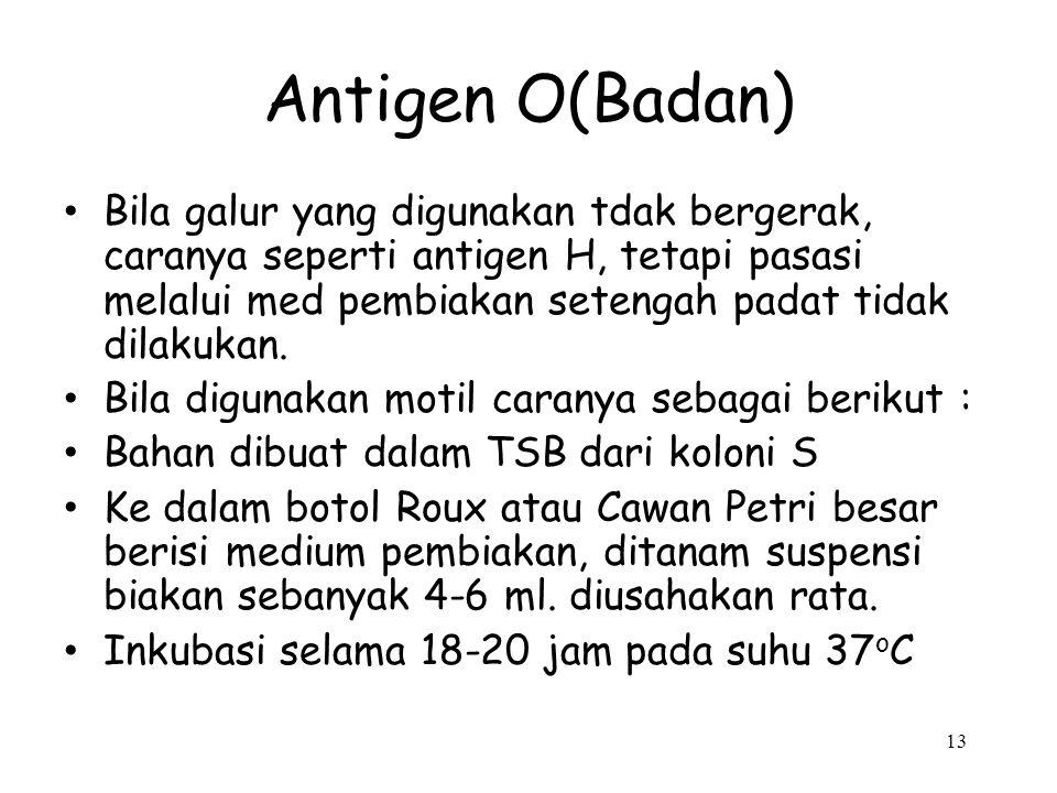 Antigen O(Badan)