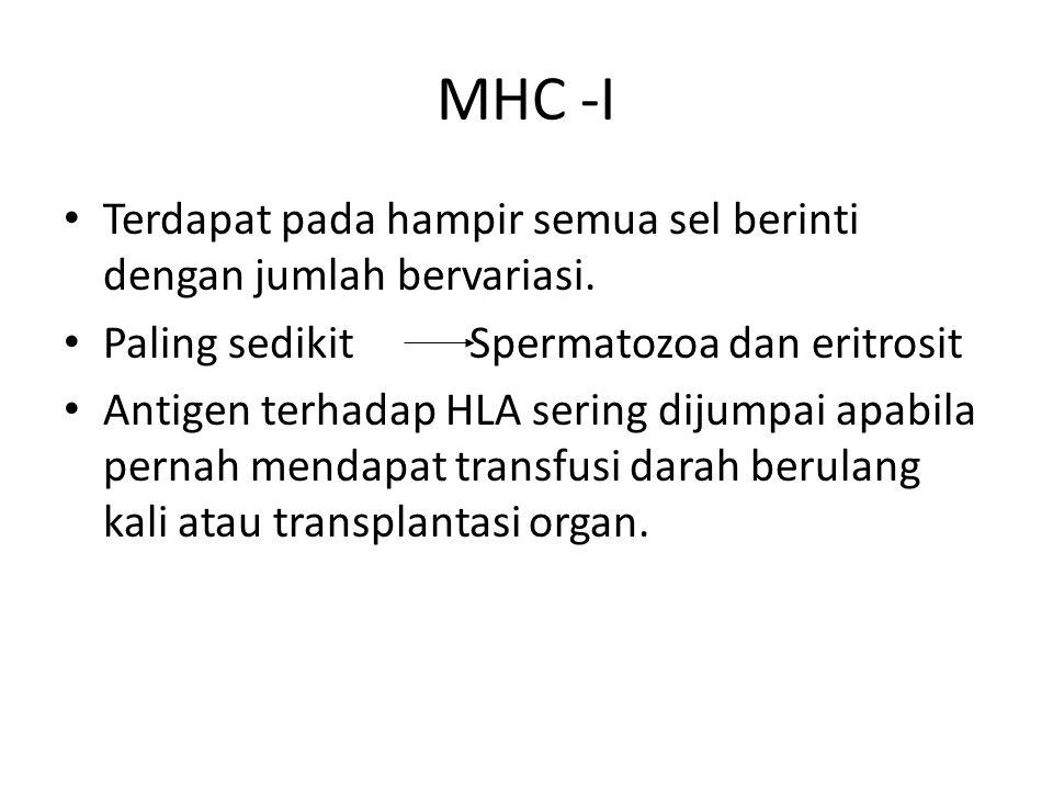 MHC -I Terdapat pada hampir semua sel berinti dengan jumlah bervariasi. Paling sedikit Spermatozoa dan eritrosit.